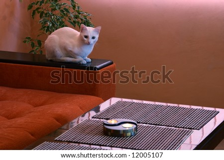 White cat with candle in living-room