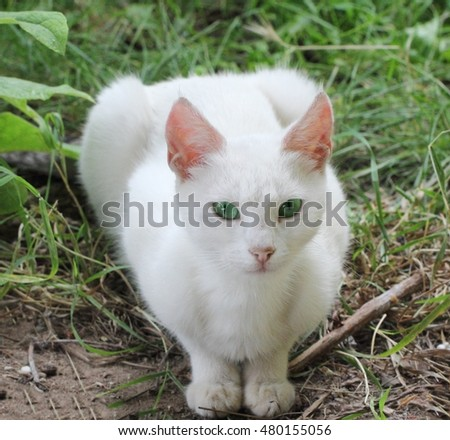 White cat with green eyes looking right