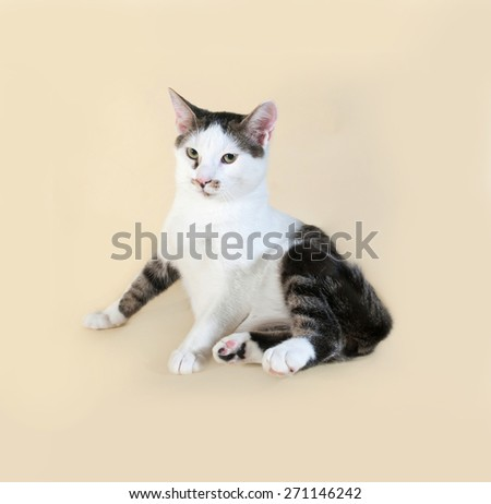 White cat with spots teenager sits on yellow background - stock photo