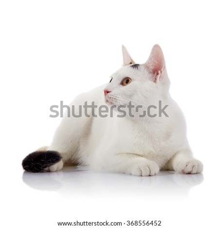 White cat with yellow eyes lies on a white background