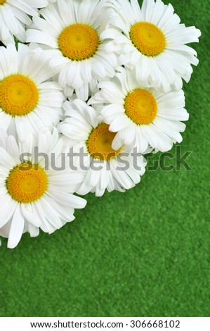 White chamomile macro. Spring Meadow with Daisies - stock photo