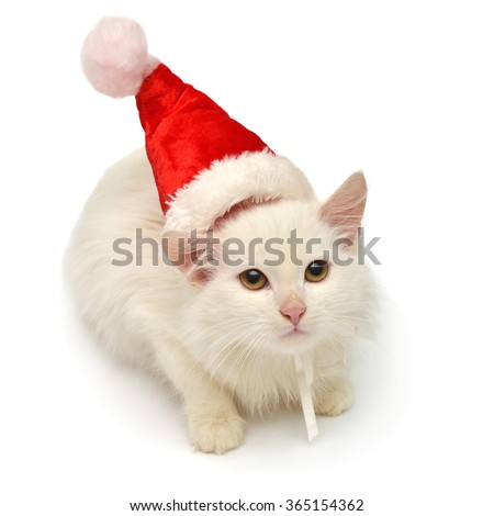 White Christmas cat in the hat isolated on white background - stock photo