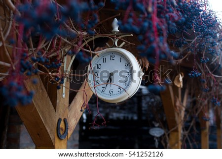 white clock outside, virginia creeper in autumn colors with dark blue berries