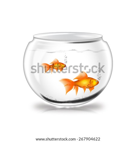 White color glass fish pot with water contain two gold fish on white background.