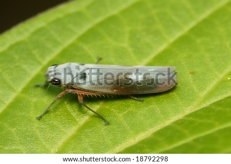 colorful leaf hopper by - photo #47