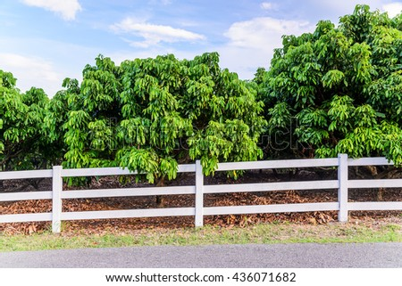 White concrete fence in fruit garden field - stock photo