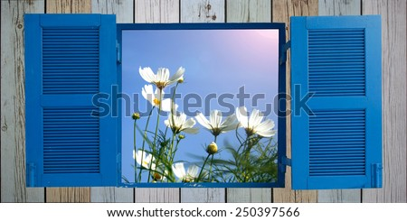 white cosmos flower and old wood window - stock photo
