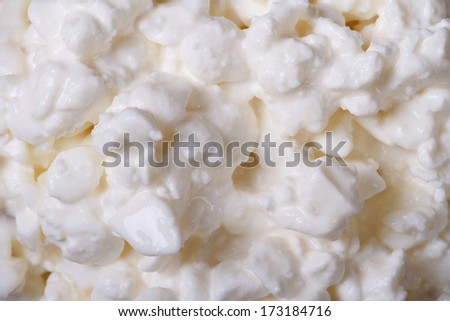 white cottage cheese texture closeup. macro.  - stock photo