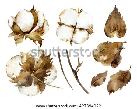 White cotton flowers. Set of design elements. Watercolor illustration