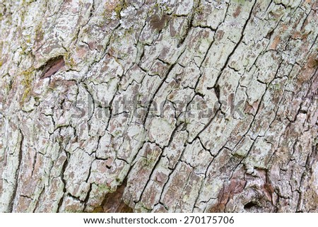 white cracked bark texture with lichens - stock photo