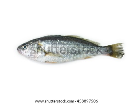 White croaker or Silver jewfish (Pennahia argentata, Houttuyn,1782  ) isolated on white.
