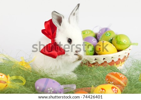 White cute bunny with a red bow on his neck is licking his paws, surrounded by colorful painted Easter eggs. High resolution studio image. - stock photo