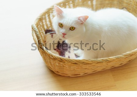 White cute fluffy Persian cat in a woven basket - stock photo