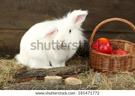 White cute rabbit with apples in basket, on hay