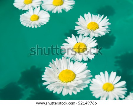 White Daisies in water - stock photo