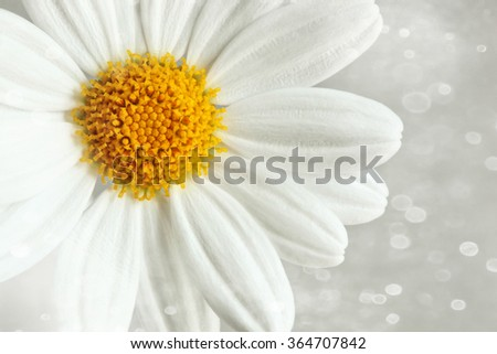 White daisy against a soft blur background - stock photo