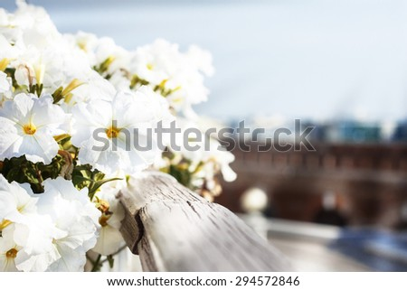 White delicate flowers grow on the balcony railing . summer, the sun's rays . in the background the city. - stock photo