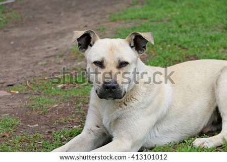 white dog lying on green grass in the park