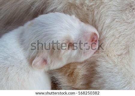 white dog newborn sleeping so cute - stock photo