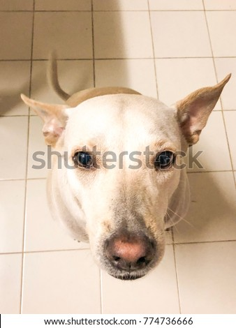 White dog sit on the floor and look at my face