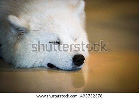 white dog sleep on the floor with vignette