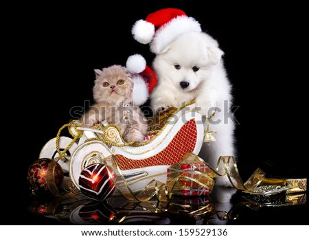 White dog spitz  and kiten Persian  wearing a santa hat, kiten and puppy - stock photo