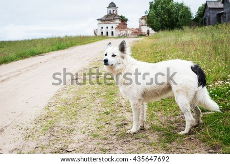 White dog standing near the road - stock photo