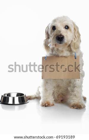 White dog wearing blank cardboard sign around neck waiting for food