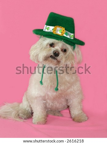white dog with St. Patrick's day hat - stock photo
