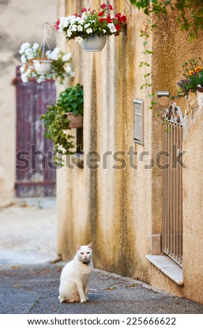 White domestic cat on typical street with ancient buildings in Grambois village, Provence, France