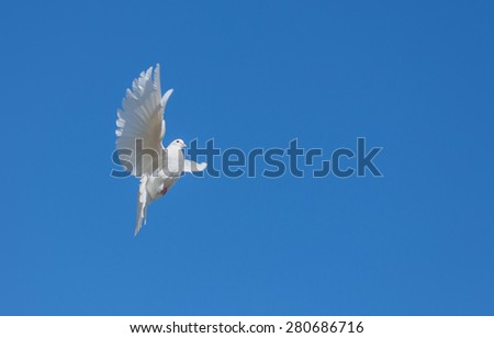 White dove flying against the blue sky - stock photo