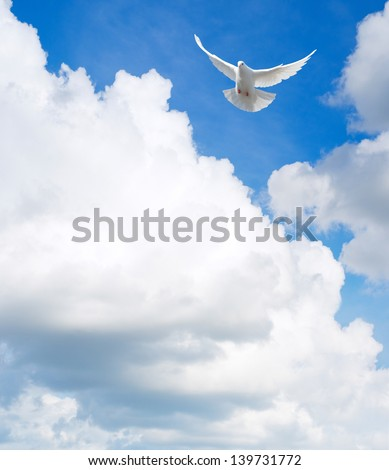 White dove flying in the sky - stock photo