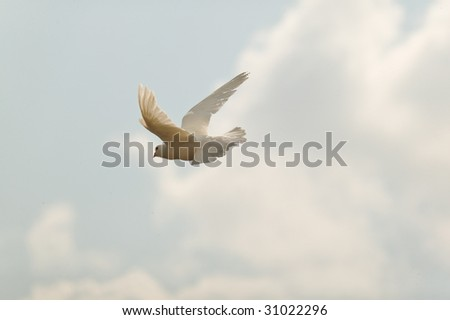 white dove flying on a blue sky