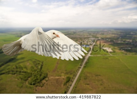white dove flying over the city and the road, the bird is good news, white wings - stock photo