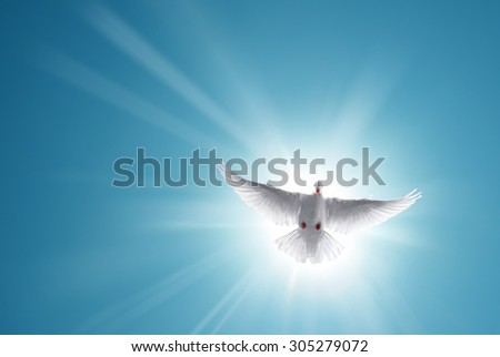 White dove in a blue sky, symbol of faith  - stock photo