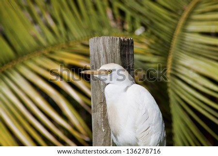 White egret silhouetted against the blue ocean as it watches for fish in the water. the entire body of this elegant bird is shown. - stock photo