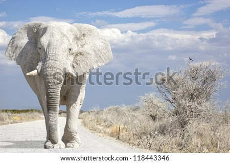 White elephant walks on road - stock photo
