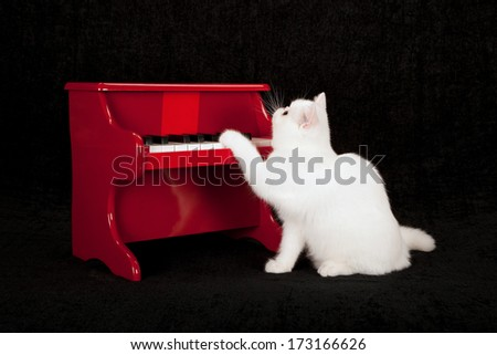 White exotic kitten playing red toy piano against black background - stock photo