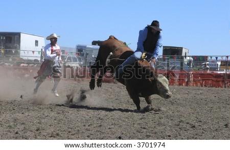 White Faced Bucking Bull - stock photo