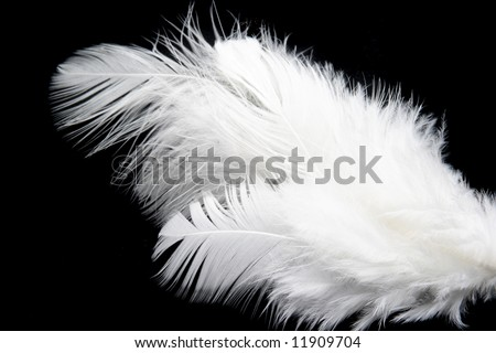 White feather - stock photo