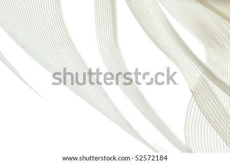white feather abstract background - stock photo
