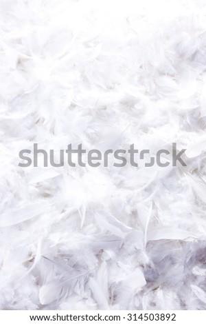 white feather background - stock photo