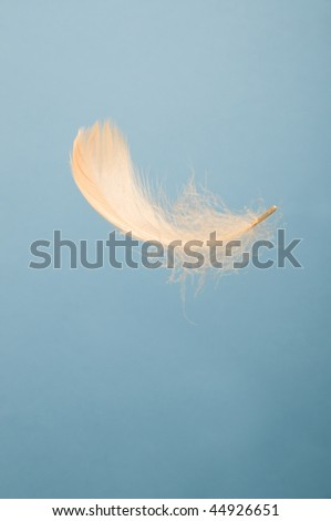 White feather falling in the blue sky - stock photo