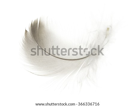 White feather  isolated on a white  background - stock photo