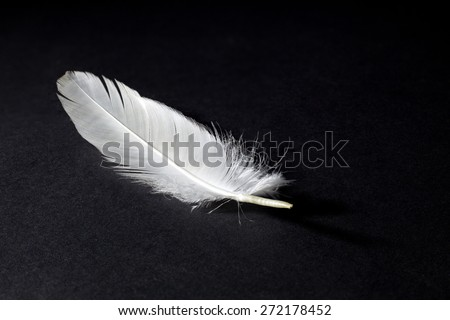 White Feather Isolated on Black Background - stock photo