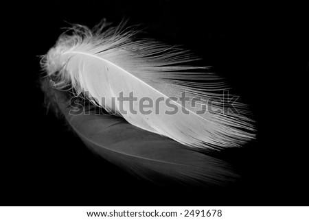 White feather mirrored. - stock photo