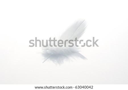 White feather on white board - stock photo