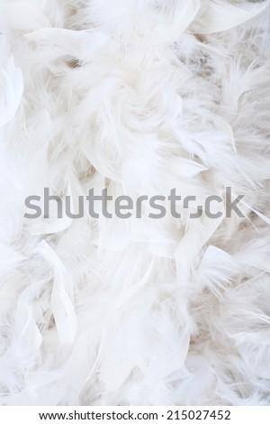 white feathers - stock photo