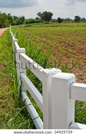 White fence and corn field