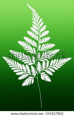 White Fern Leaf Silhouette on Green Background - stock photo